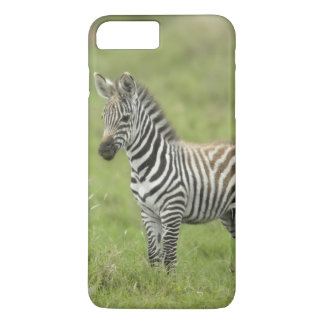 Young Zebra In The Serengeti Plain iPhone 7 Plus Case
