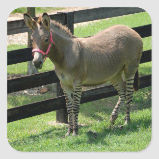 Your Custom Square Stickers Zonkey