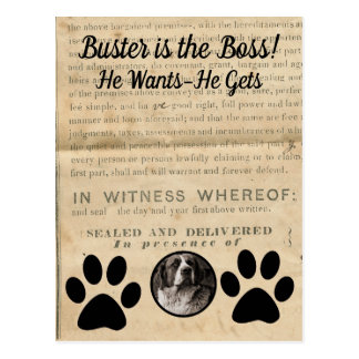 Your Dog Photo n Paws 1860 Legal Document Funny Postcard