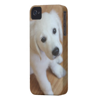 your favorite pet photo on an iphone4 case