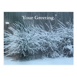 Your Greeting Snow Covered Wisteria Postcards