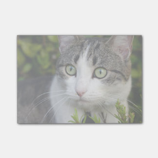 Your Pet Photo Gift Personalized Post It Notes Cat