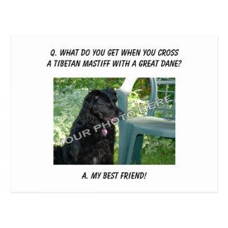Your Photo Here! Best Friend Tibetan Mastiff Mix Postcard