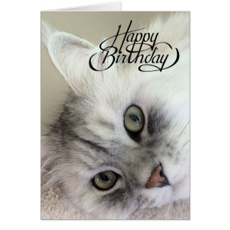 You're Meowvelous Birthday Card