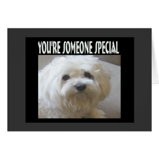 You're Someone Special Maltese Message of Love Card