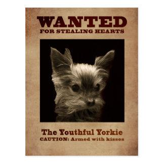 Youthful Yorkie_ Postcard