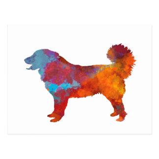 Yugoslavian Shepherd DOG in watercolor Postcard