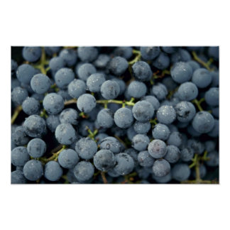 Yummy Fresh blue grapes Poster