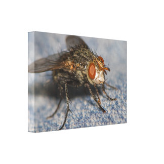 Yummy Gallery Wrapped Canvas