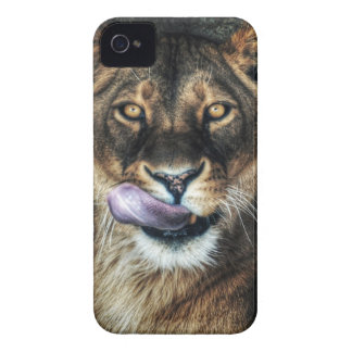 Yummy - lioness licking iPhone 4 Case-Mate case