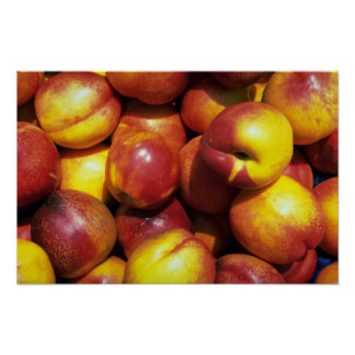 Yummy Nectarines Posters