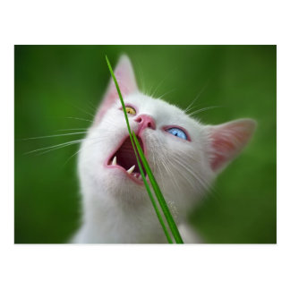 Yummy - Van Cat Postcard