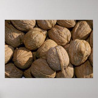 Yummy Walnuts Print