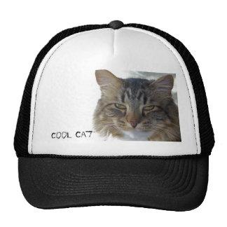 zak, Cool Cat hat