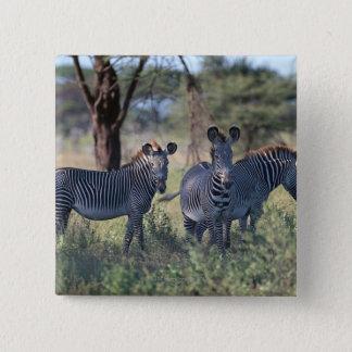 Zebra 2 15 cm square badge
