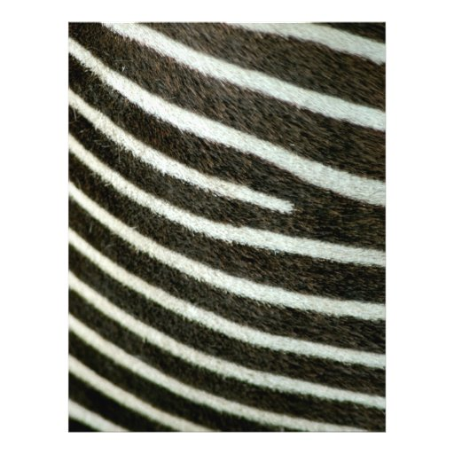 Zebra 2 full color flyer