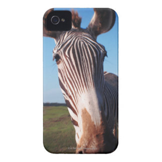 zebra 2 iPhone 4 covers