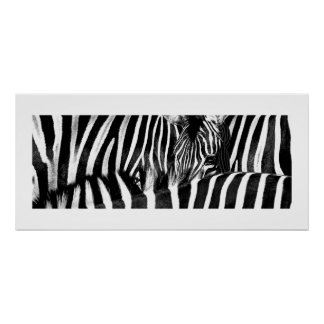 Zebra #3-Poster Poster