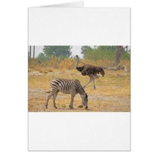 Zebra and Ostrich TomWurl.jpg Greeting Card