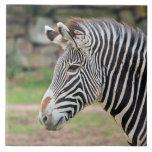 Zebra animal ceramic tile