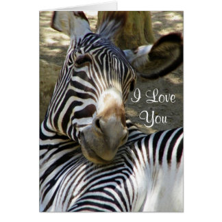 Zebra,Any Occasions_ Greeting Card