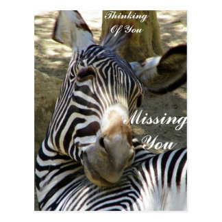 Zebra,Any Occasions_ Postcards