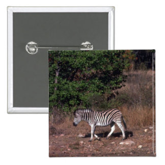 Zebra - At Water Hole Pinback Buttons