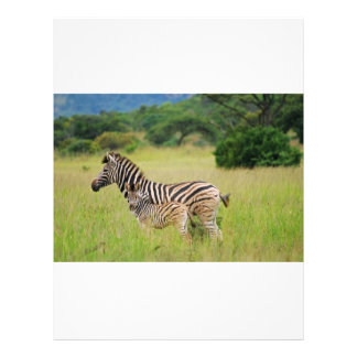 Zebra baby and mom 21.5 cm x 28 cm flyer