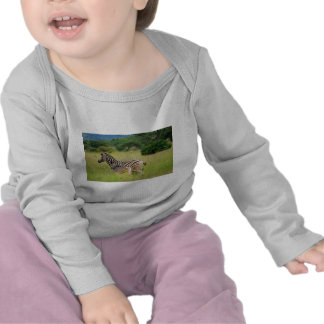 Zebra baby and mom t-shirts