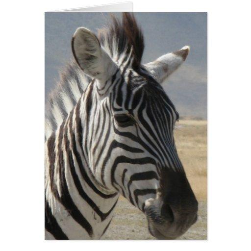 Zebra baby cards