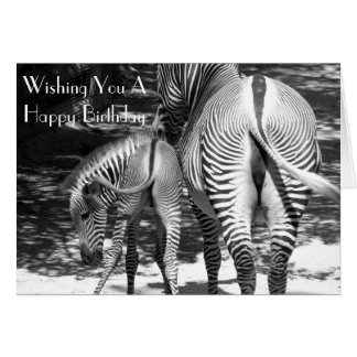 Zebra Birthday Greeting - Fun Happy Birthday Card