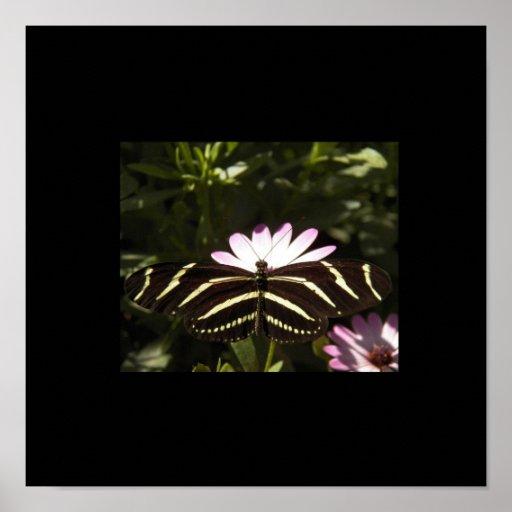 Zebra Butterfly Black Border Print