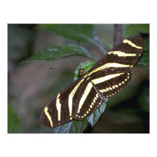 Zebra butterfly, Costa Rica Custom Flyer