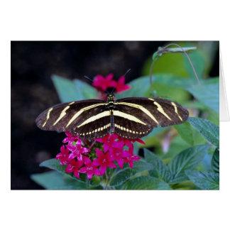 Zebra butterfly, Heliconius charitonius Card