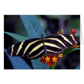 Zebra butterfly, Heliconius charitonius Greeting Card