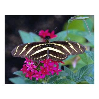 Zebra butterfly, Heliconius charitonius Flyer Design