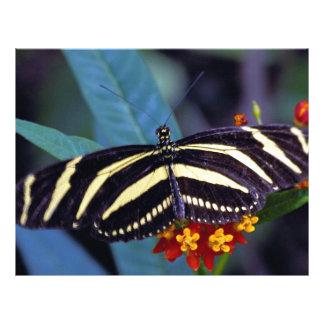 Zebra butterfly, Heliconius charitonius Custom Flyer