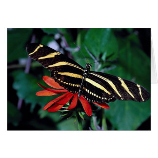 Zebra butterfly on Mexican flaming vine flower Card