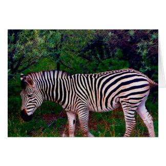 zebra card