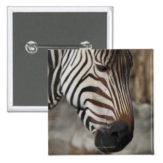 Zebra, close-up 15 cm square badge