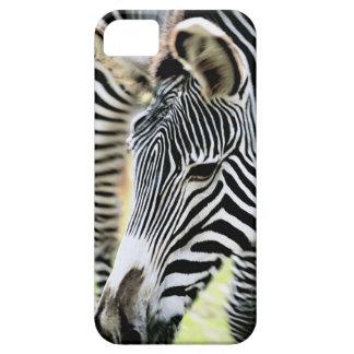Zebra, close-up, selective focus iPhone 5 cases