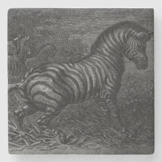 Zebra Coaster! Stone Coaster