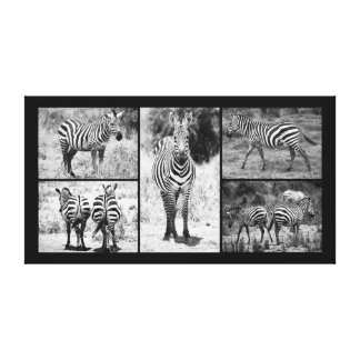 Zebra Collection Canvas Print