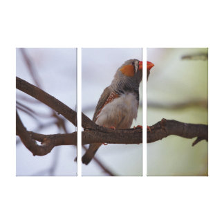 Zebra-finch Canvas Print