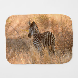 Zebra foal in morning light baby burp cloth
