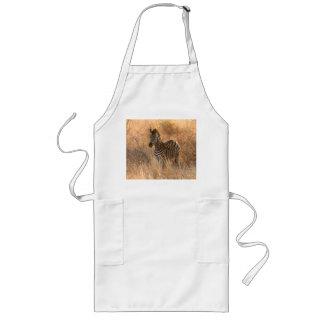Zebra foal in morning light long apron