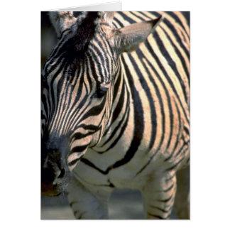 Zebra, Frontal Greeting Cards