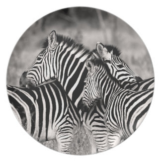 Zebra Herd Nature Safari Black and White Stripes Plate