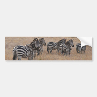 Zebra in Kenya Bumper Sticker