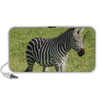 zebra in Serengeti Ngorongoro Crater Travelling Speakers